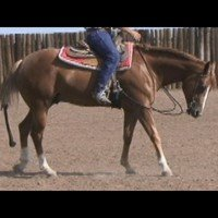 Transitions with Champion Trainer and AQHA Judge, Buddy Fisher Pt. 2