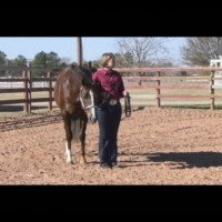 Achieve Greater Success In Horsemanship with World Champion Trainer, Brynne Davis