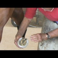 Shoeing The Pleasure Horse with Master Farrier, Danny Terry
