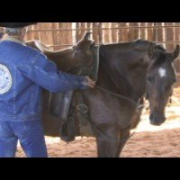 Build Flexibility In The Roundpen with with World Champion Horse Trainer, Cleve Wells