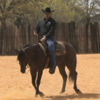 Daily Workout 1: Build Strengths with World Champion Horse Trainer, Cleve Wells