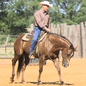 Includes over 60 performance horse clinics