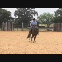 The Indirect Turn with World Champion Horse Trainer, Andy Cochran